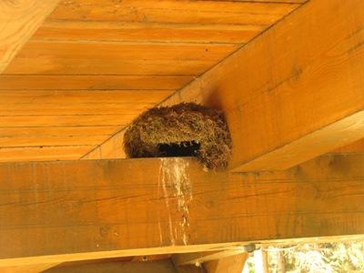 skorec vodní hnízdu pod mostem2