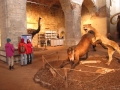 lev útočí na koníka