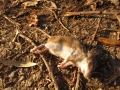 myšice 3