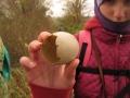 vajíčko husy