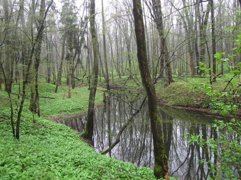 Polanský les3