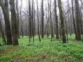 Polanský les2