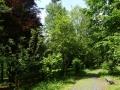 arboretum v Hranicích