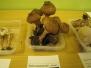 Výstava hub, O. Zábřeh, 24.9.2013