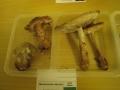 Výstava hub 11