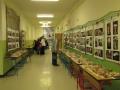 Výstava hub 3