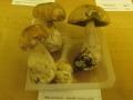 Výstava hub 6
