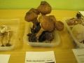 Výstava hub  8