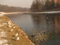 Ostravice v centru Ostravy 2